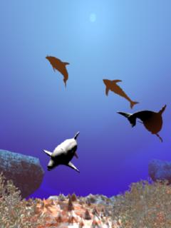 海とイルカ