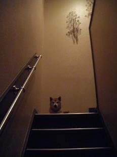 階段のうえのシゲ