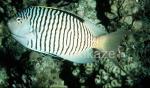 zebra-1.jpg