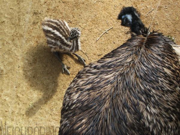 chick06.jpg