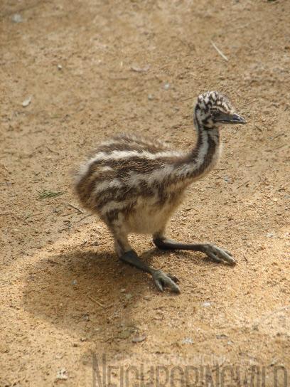 chick3.jpg