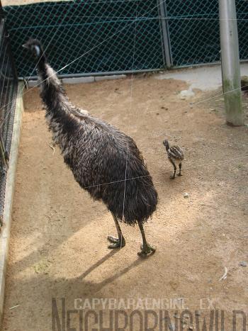 chick5.jpg