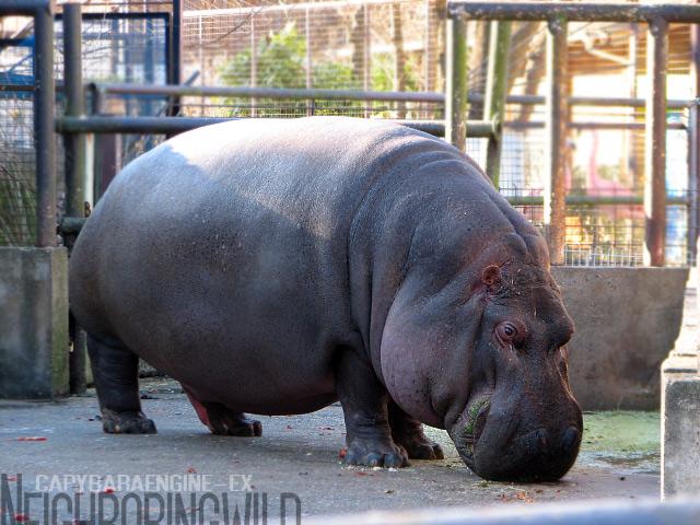 hippoppo1.jpg