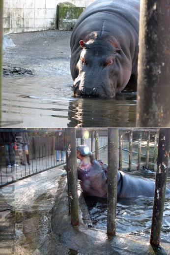 hippoppo4.jpg
