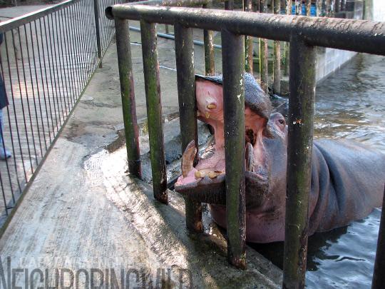 hippoppo5.jpg