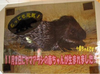 tobuyama02_20090124235439.jpg