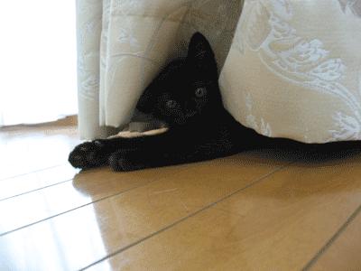 隠れるまめたろう