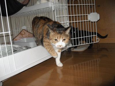 ケージの猫トイレ使用を見られて、ちょっと決まり悪いアンナ
