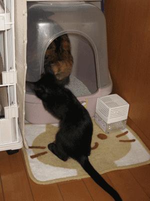 ちょっと、やめなよ。おトイレ中だよ。