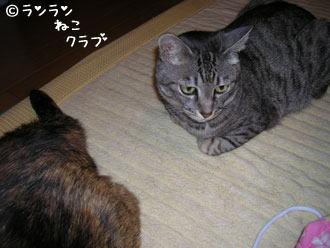 20061111rangure2.jpg
