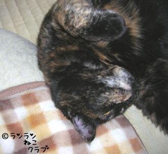 20061114ran2.jpg