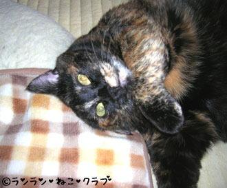 20061114ran3.jpg