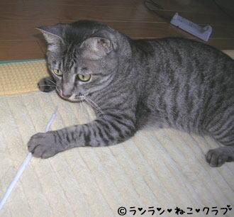 20061115gure4.jpg