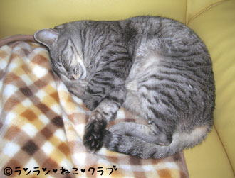 20061124gure1.jpg