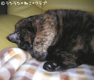 20061127ran1.jpg