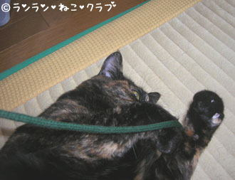 20061129ran1.jpg