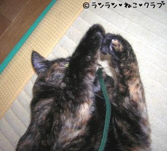 20061129ran2.jpg