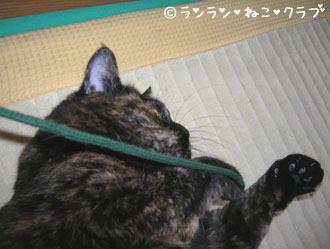 20061129ran3.jpg