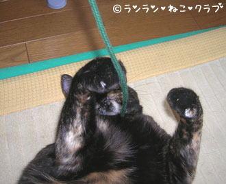 20061129ran4.jpg