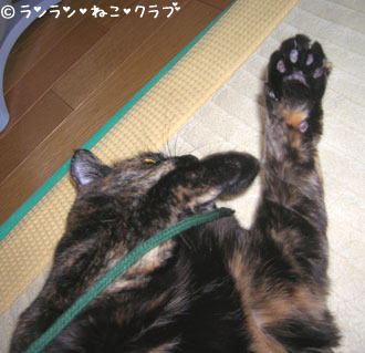 20061129ran5.jpg