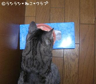 20061130gure1.jpg