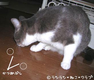 2006115pi1.jpg