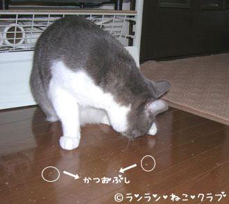 2006115pi2.jpg