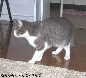 2006115pi4.jpg