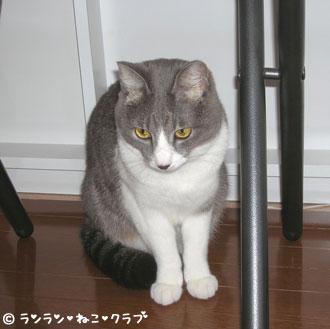 2006115pi5.jpg