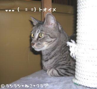 20061210gure2.jpg