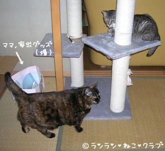 20061210gure3.jpg