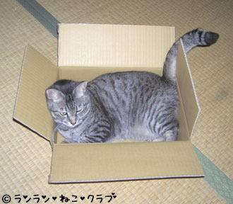 20061216gure1.jpg
