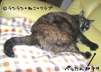 20061218ran3.jpg