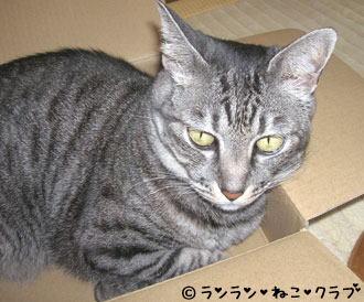 20061219gure2.jpg