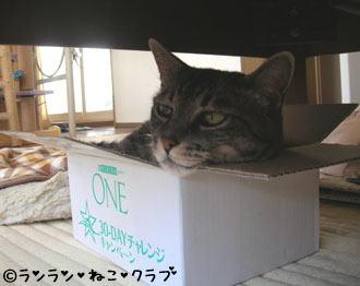 20061220gure1.jpg