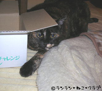 20061221ran.jpg