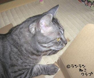 20061222gure.jpg