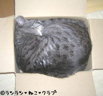 20061228gure.jpg