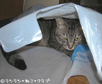 20061229gure1.jpg
