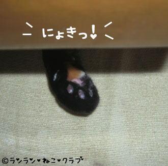 20070104ran2.jpg