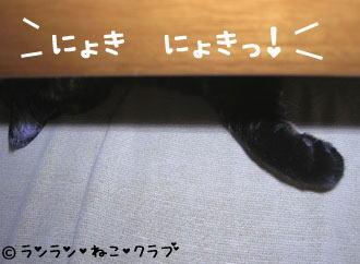 20070104ran3.jpg