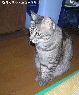 20070109gure1.jpg
