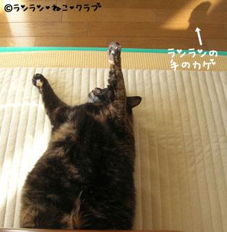 20070113ran3.jpg
