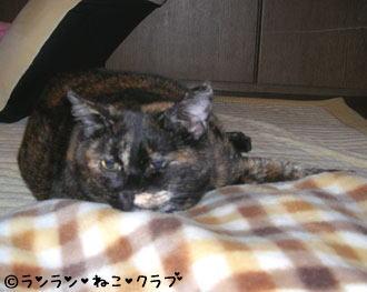 20070115ran1.jpg