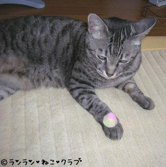 20070119gure1.jpg