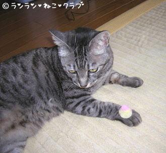 20070119gure2.jpg