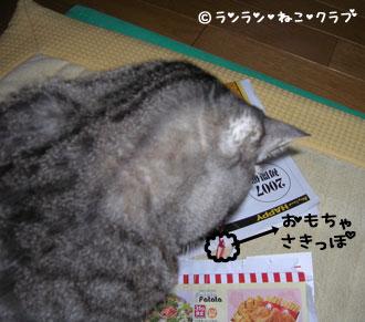 20070124gure.jpg