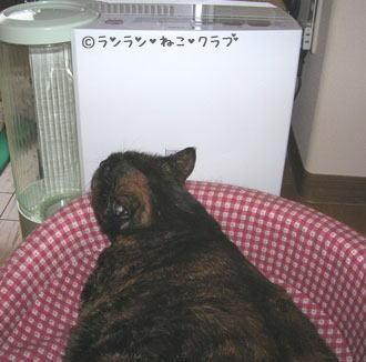 20070206ran1.jpg