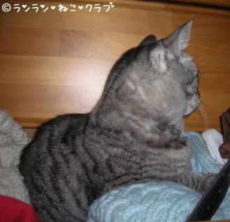 20070208gure1.jpg