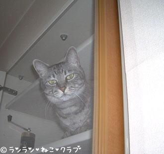 20070209gure2.jpg